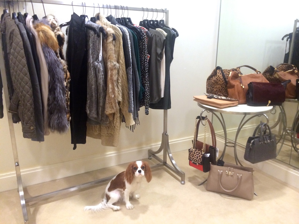 Dogs & Denim Saks Fifth Avenue - The Uppity Puppy