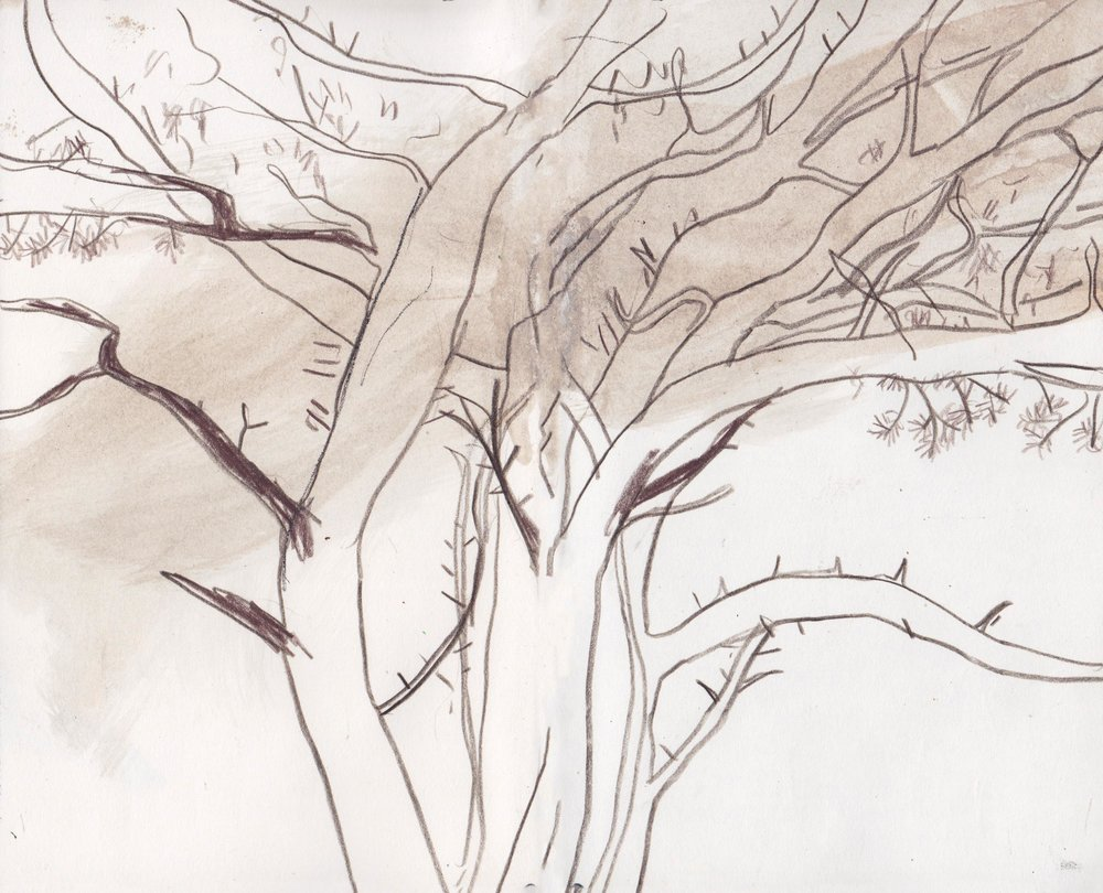 treesketch.jpg