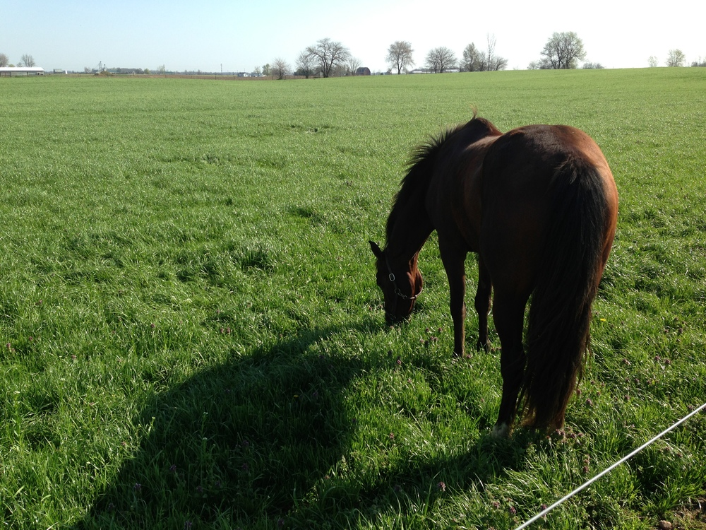 Horses love the taste of CISCO's Pasture Perfect Champion Mix.