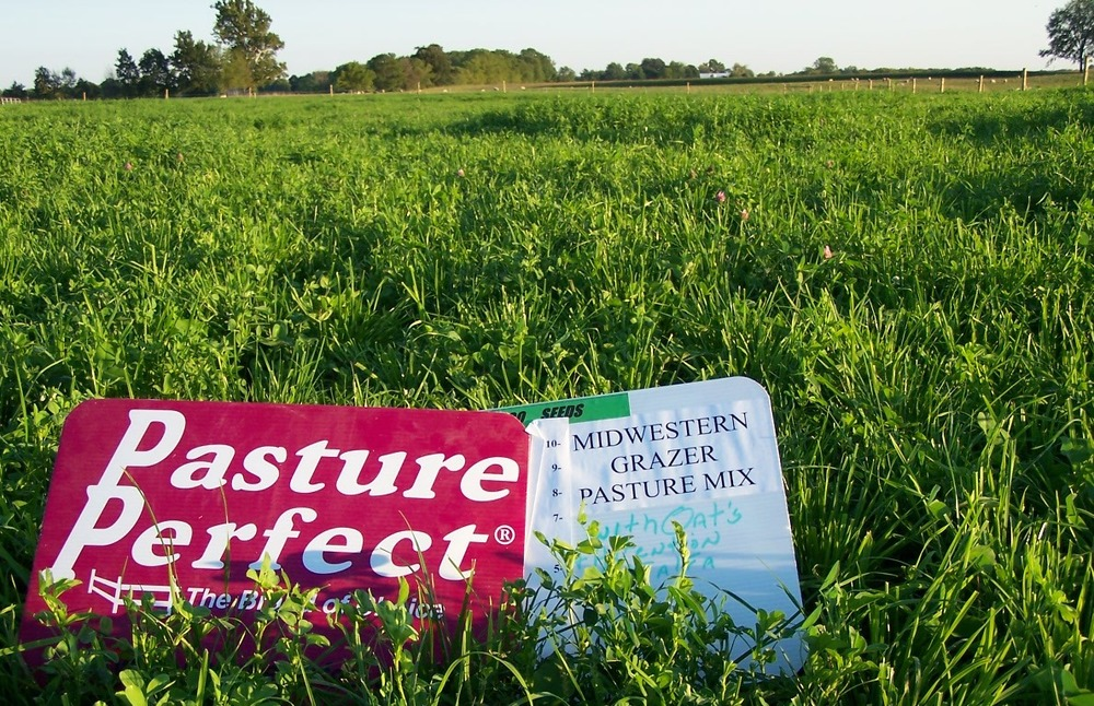 Midwestern Grazer provides plenty of lush pasture and works well even into hot weather.