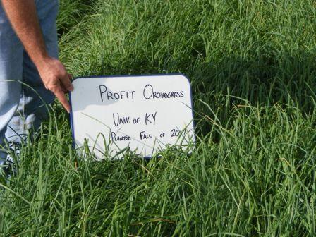 profit is a high producing orchardgrass with great rust resistance.