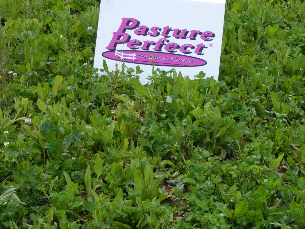 Pasture Perfect Drought Buster Close Up