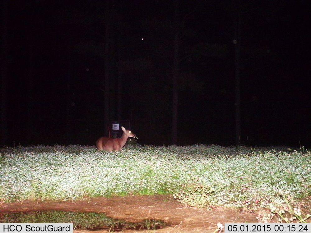 FIXatioN Balansa Clover - Deer