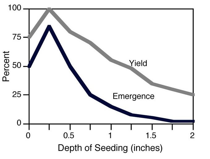 This chart is from Marvin Hall from Penn State.  It is a chart referencing seeding depth compared to yield and emergence for birdsfoot trefoil. Notice - the deeper you plant, the less success you will have.