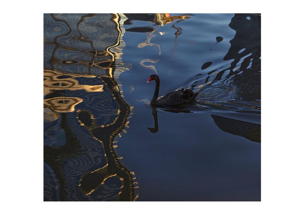 ©NCORBETT-SWANS6.jpg