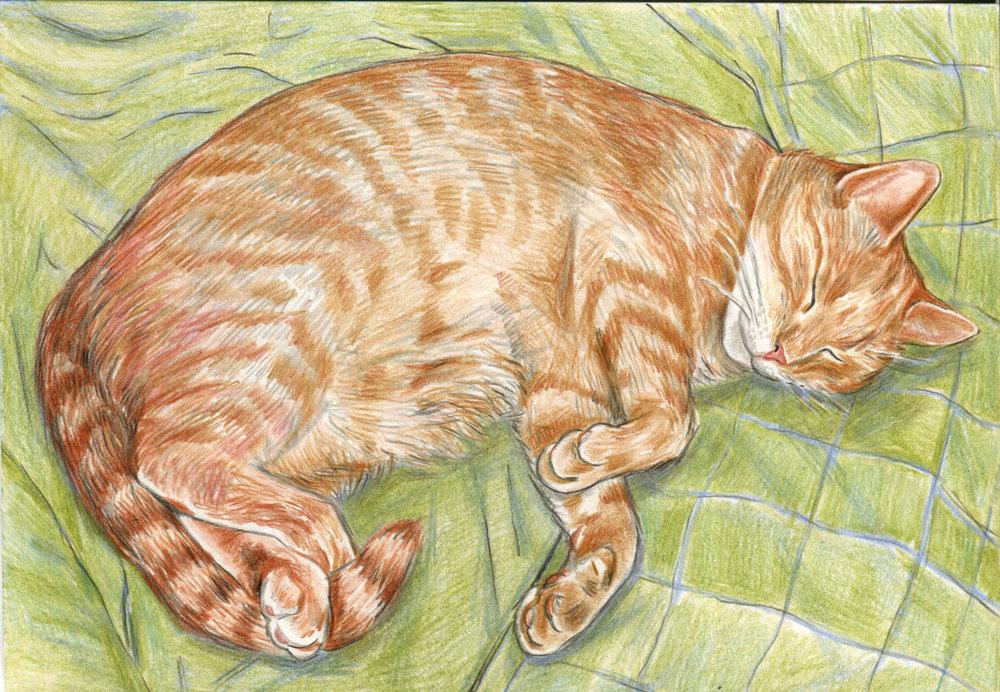 louis-cat.jpg