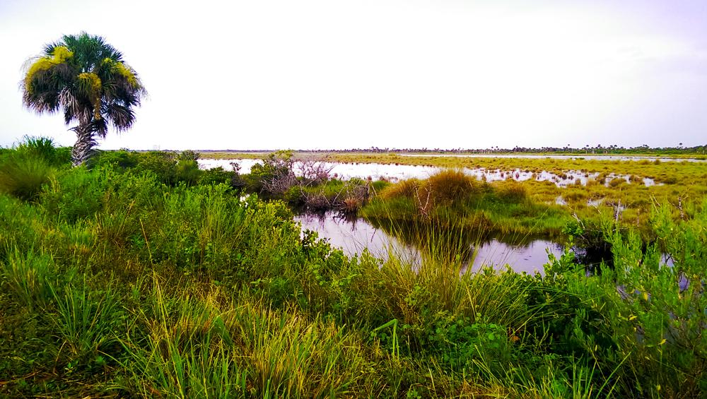Merritt Island Wildlife Refuge Titusville