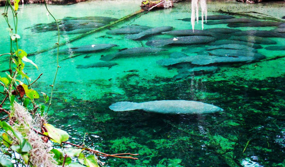 Blue Springs Orlando Florida