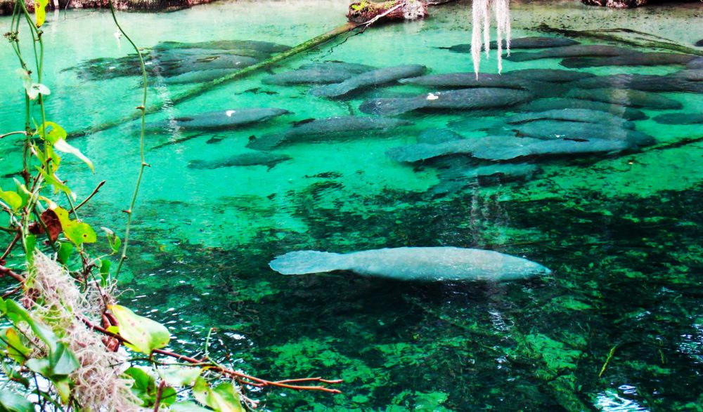 Blue Springs Orlando Florida