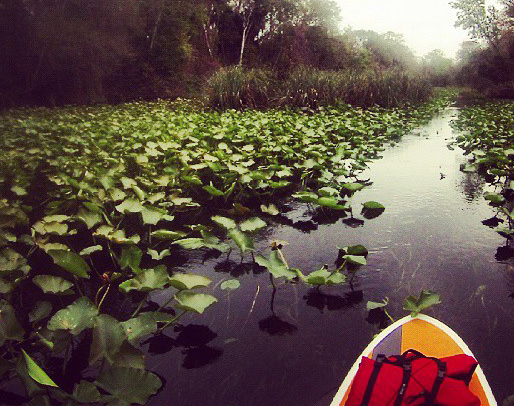 A Foggy Day  Paddleboarding the Wekiva River