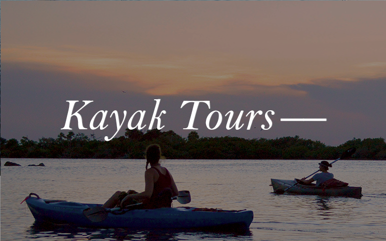 Florida is a hotbed of wildlife. Alligators, bald eagles and manatees, are a few of our favorite species. Get in the thick of it with our Kayak tours.