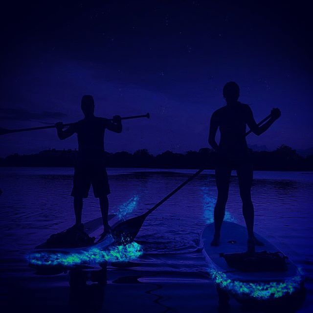 Bioluminescence is back. Come join us in experiencing one of nature's wonders. Link in bio. #bioluminescence #paddleboarding #getlocal