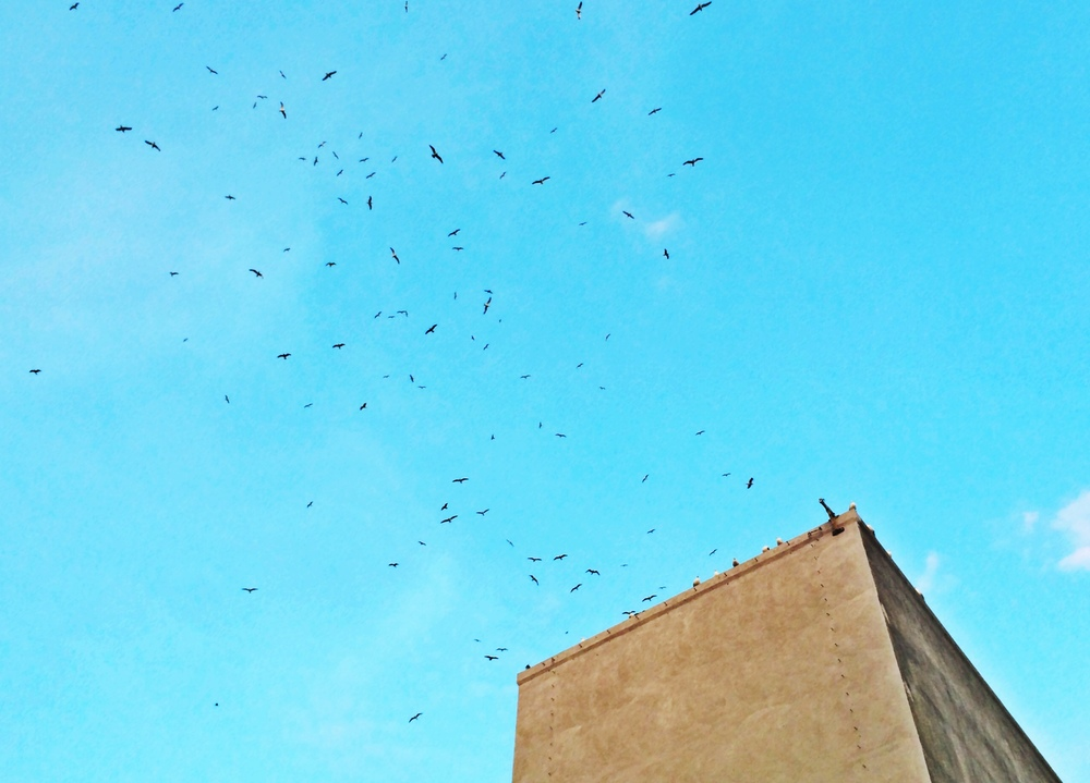 Birds swarm over the Fonda Theater in Los Angeles.