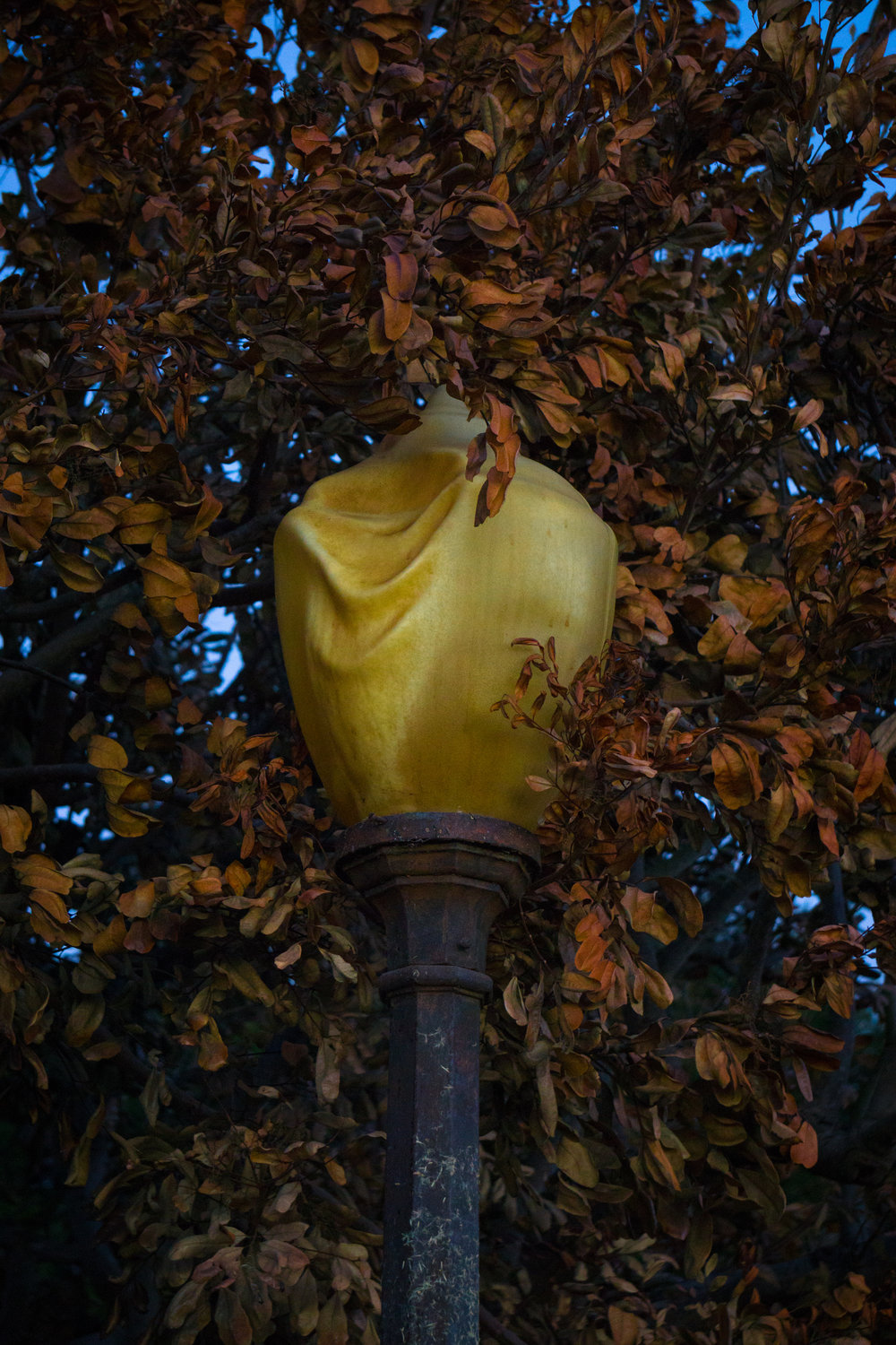 This was one of the more surreal things that I saw. A streetlight among roasted leaves just melted from the heat.