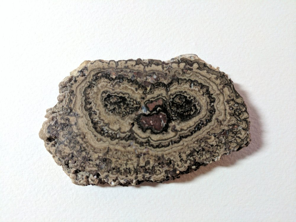 A fossilized stromatolite from Mexico. Stromatolites are ancient algae that have been mineralized.