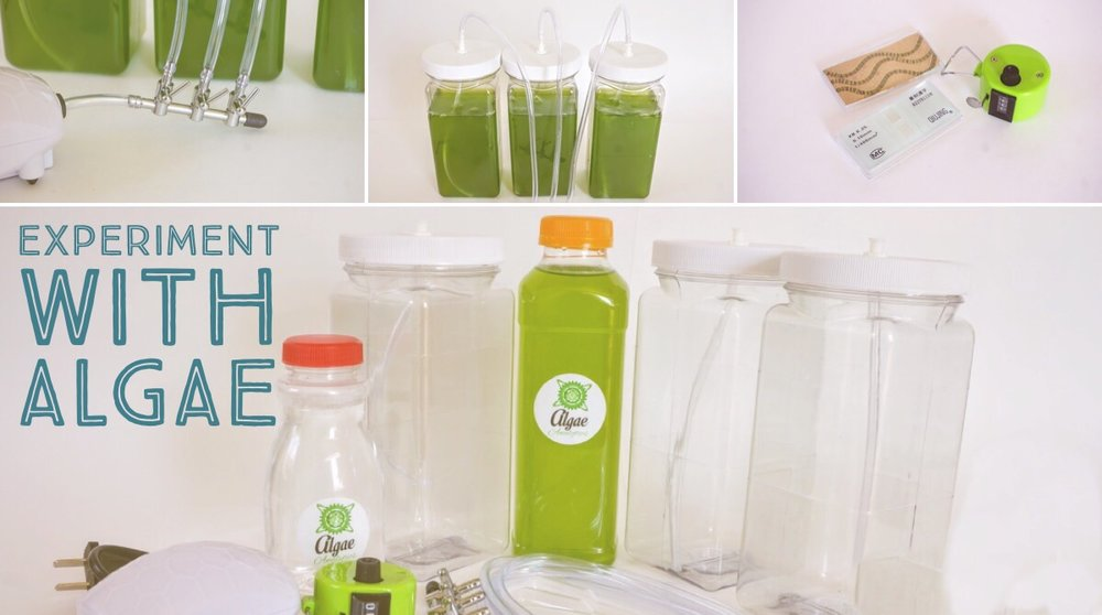 Algae Experiment Kits - Kits include everything you need to grow and experiment with algae.- Algae Culture (500 mL)-Algae Growing Media (4 L worth or Stock Solution)-Bioreactor System (Growth bottles, tubes, valve, air pump and connectors)-Cell counting slide (Hemocytometer), coverslips and tally counter-PDF Manual with Methods and Experiments