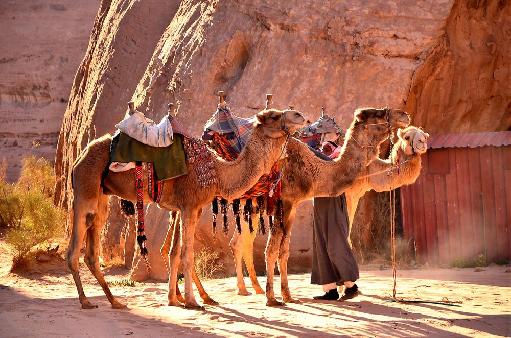 Camel trek in Wadi Rum