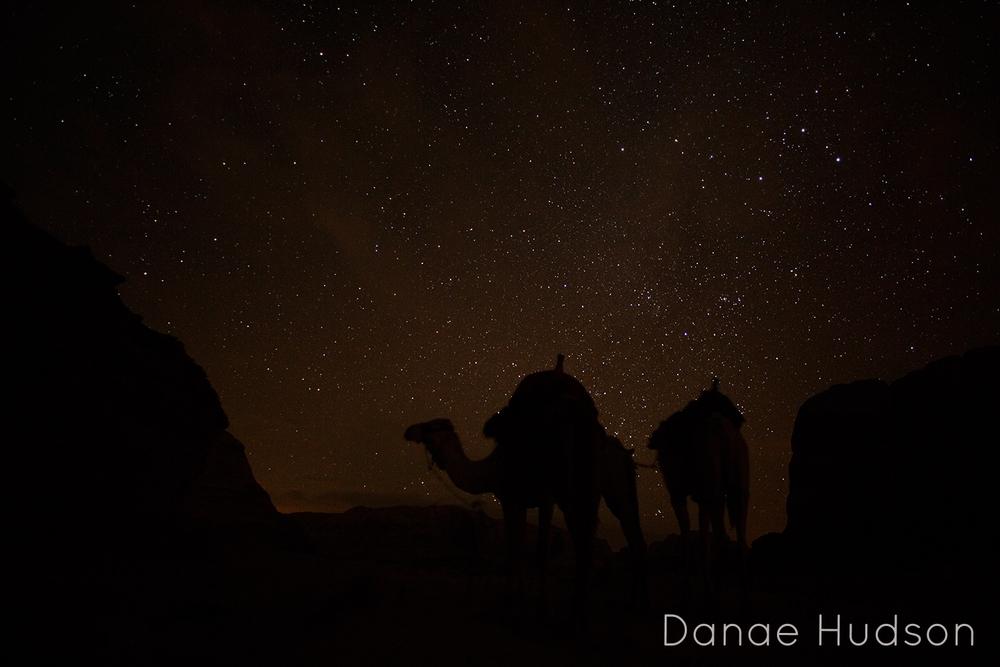 camels-2.jpg