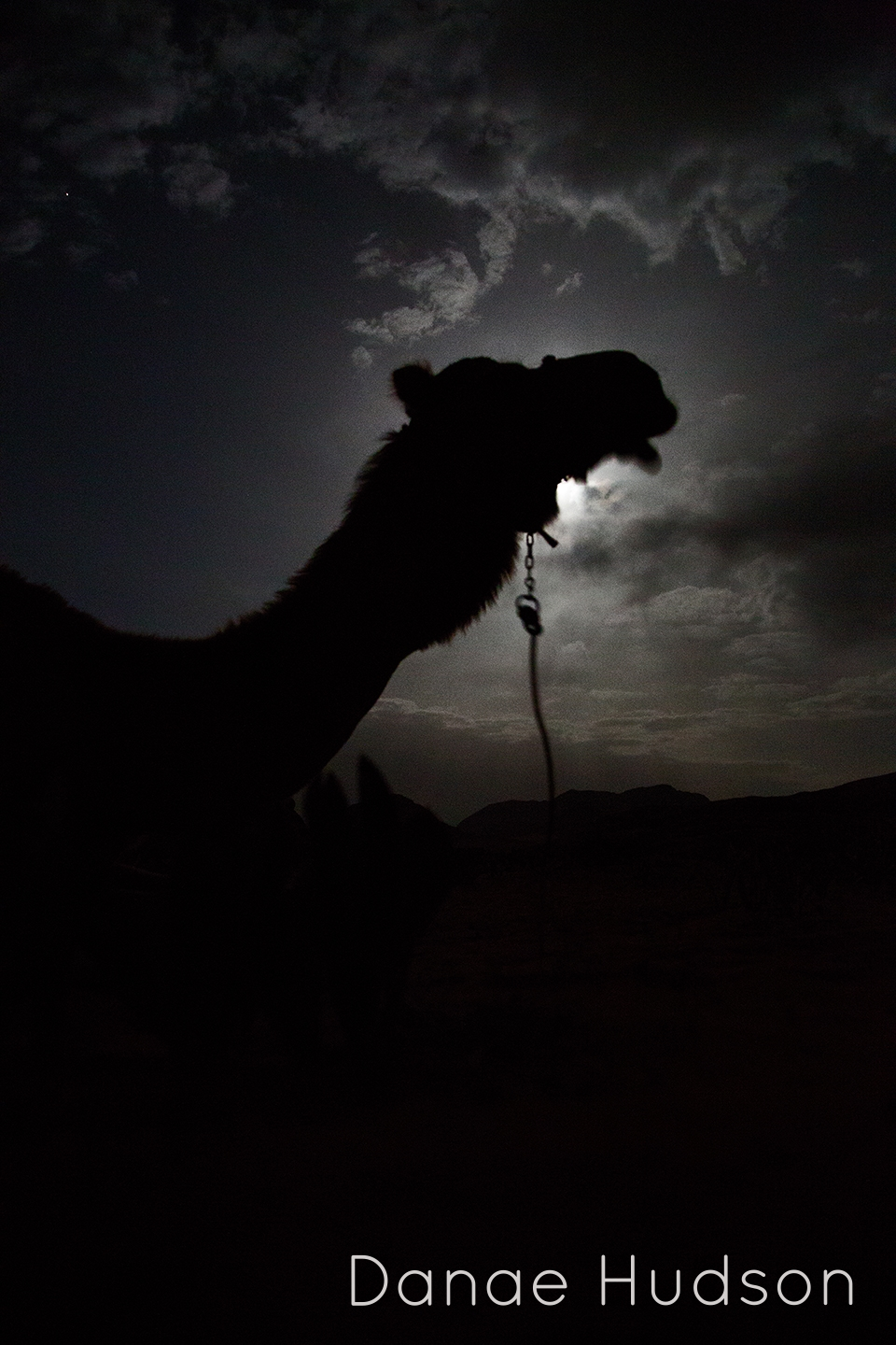 night-camel.jpg