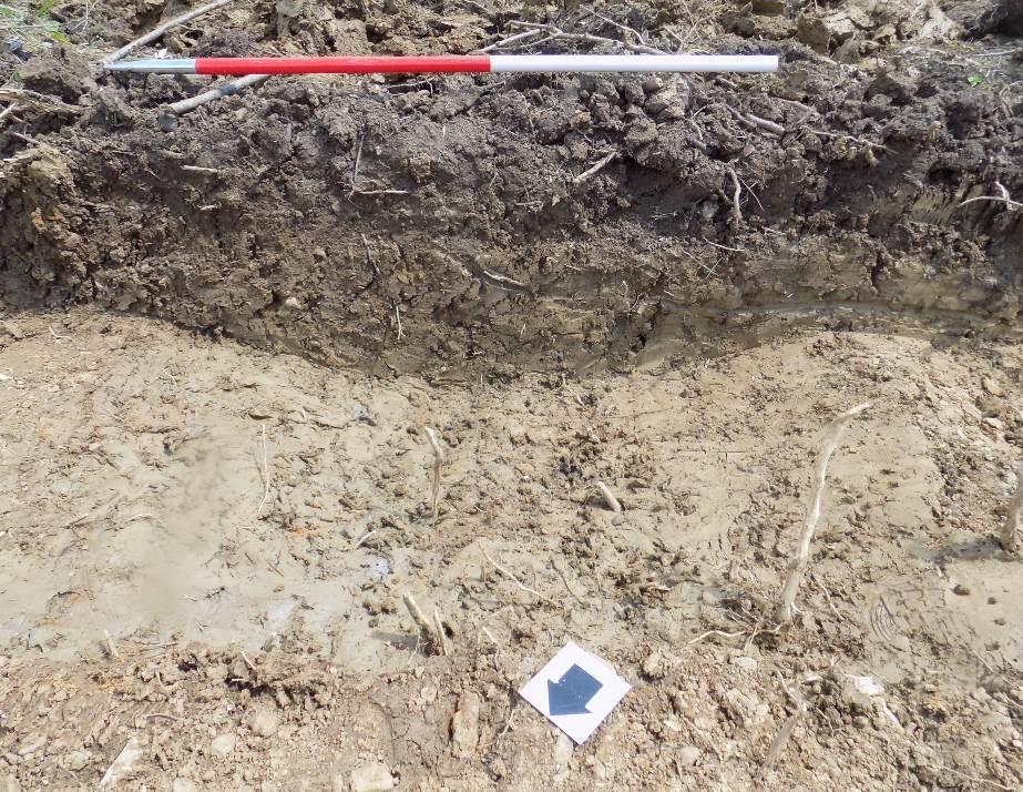 Remains of one of a number of ridge & furrow agricultural features excavated in the archaeological trial trenches