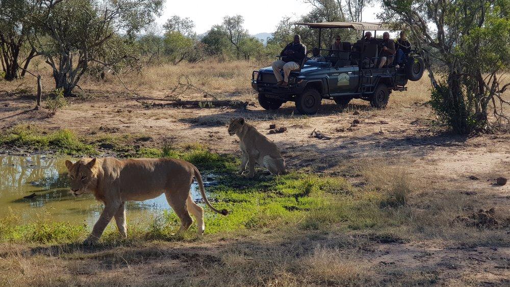 Getting close to Africa's Big Game on Safari