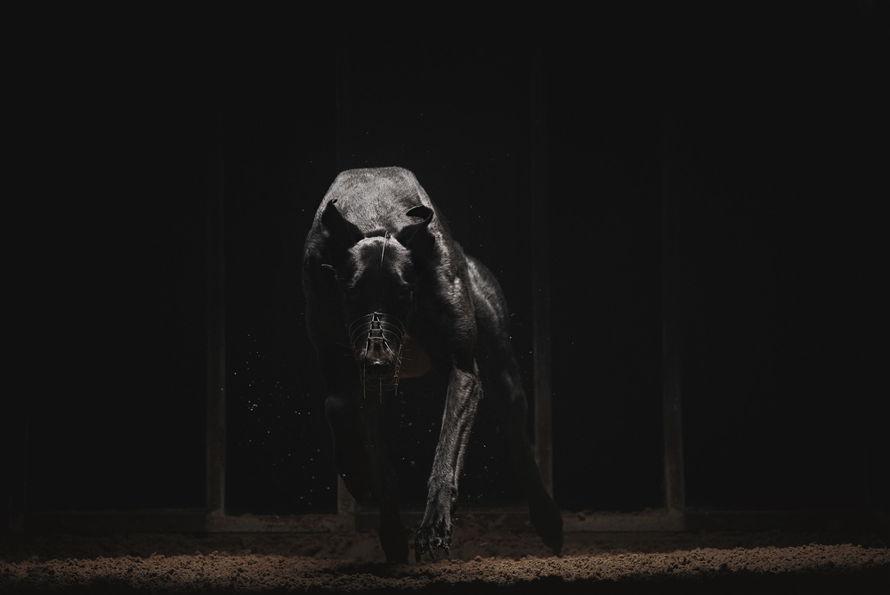 Dog_2_A.jpg