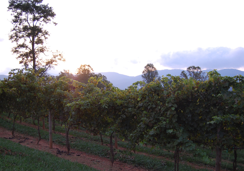 sunset across cabernet.jpg