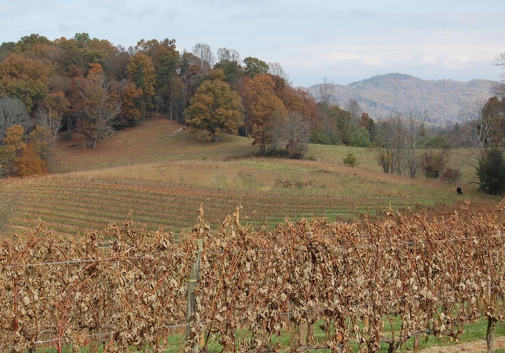 Vineyard view Oct 2013