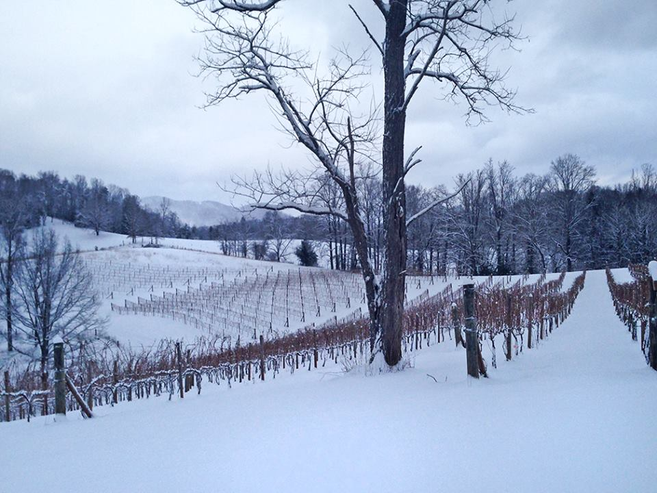 Snow in the vines, 13 Feb 2014