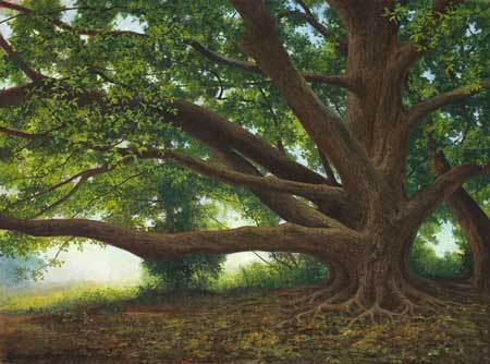 JMKah Grandmother Tree