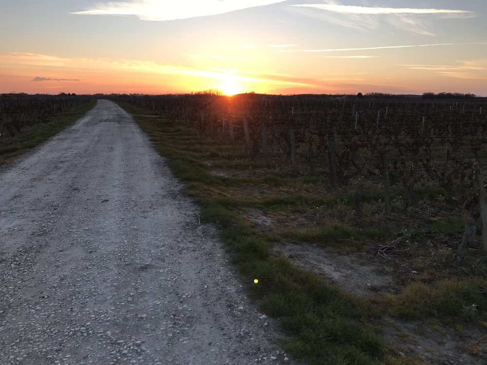 Sunset in the vineyards of Vouvray