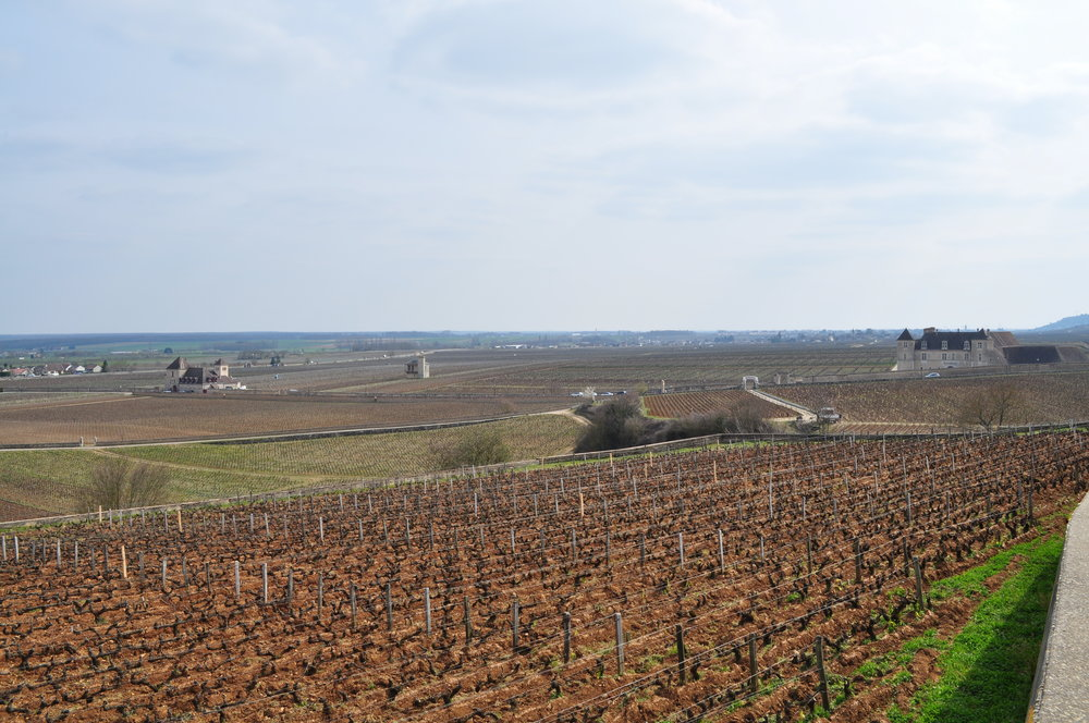 Burgundy vineyards near Chateau du Clos de Vougeot