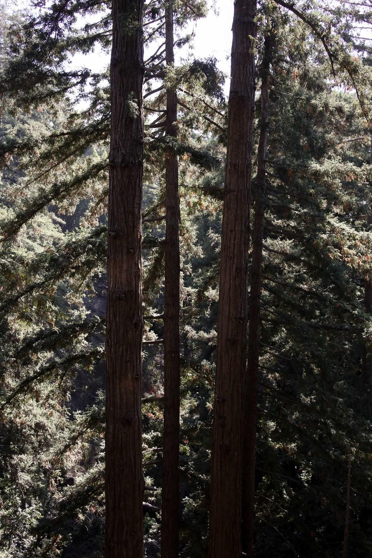 California-9274.jpg