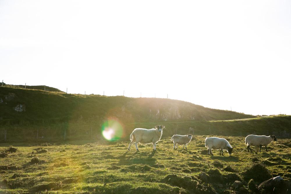 Scotland-0605.jpg