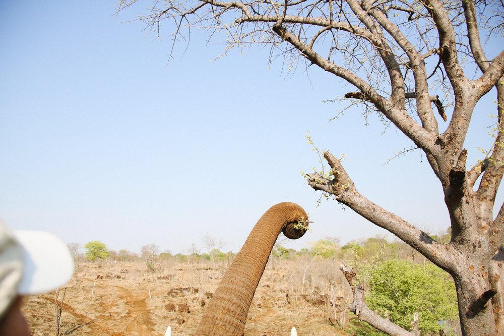 Africa - LindsayBrown -WEB-3129.jpg