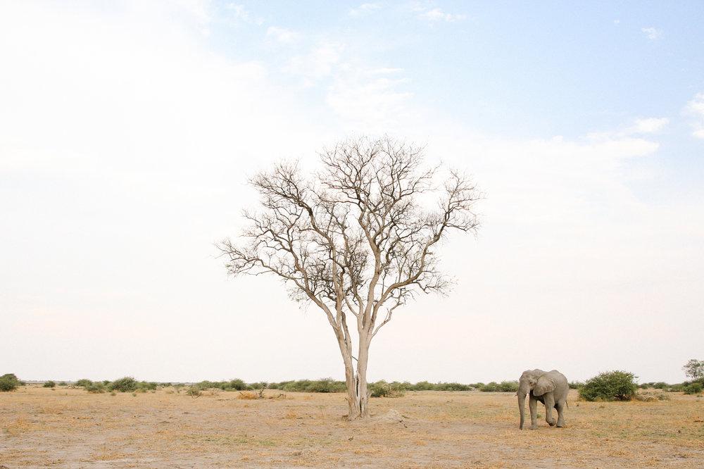 Africa - LindsayBrown -WEB-4385.jpg