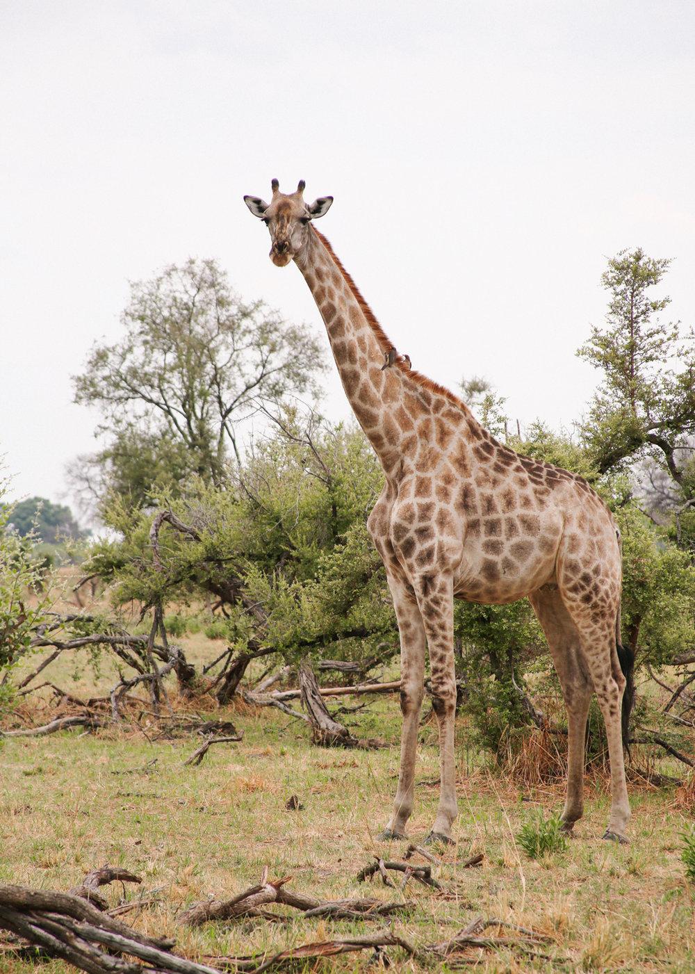 Africa - LindsayBrown -WEB-4330.jpg