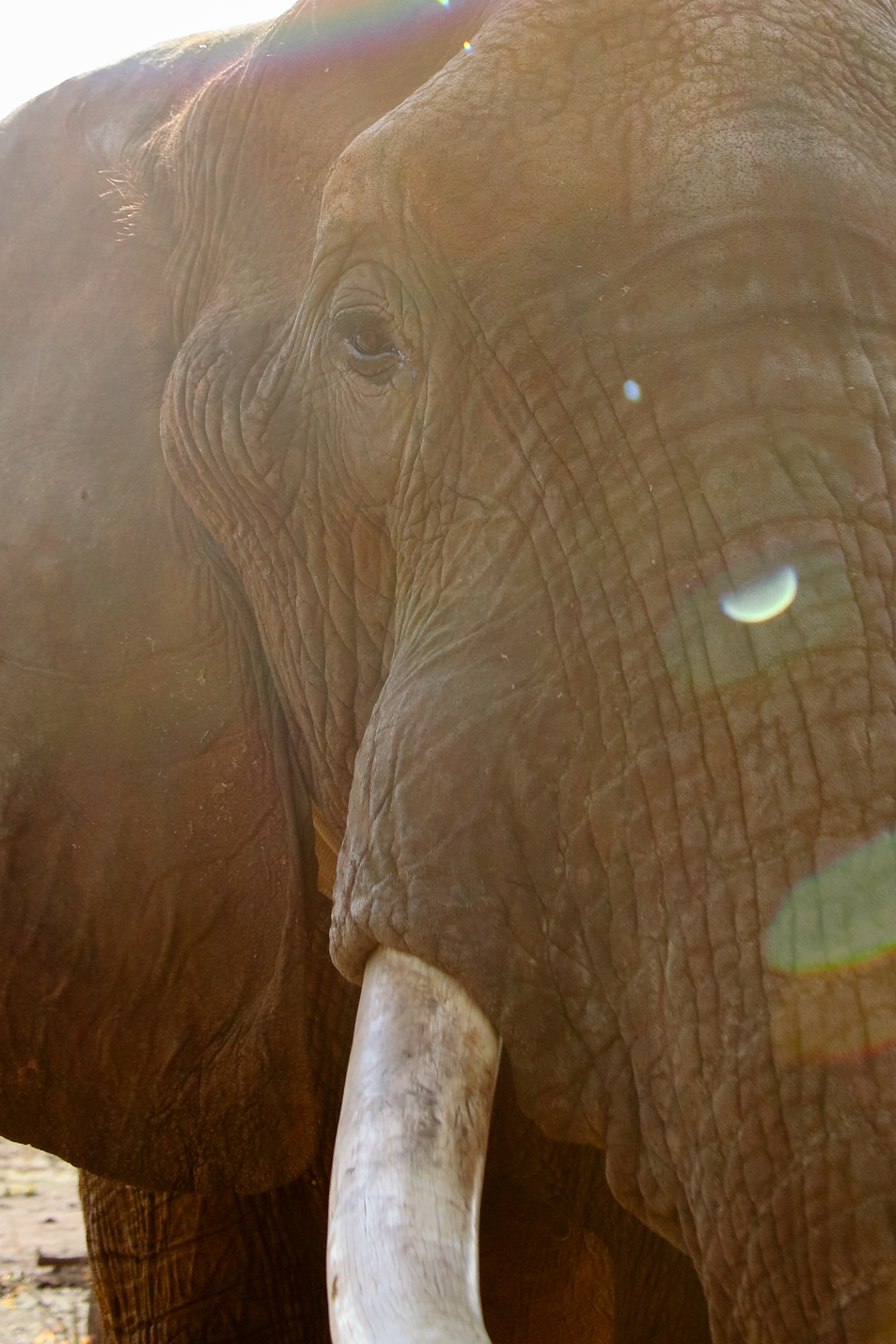 Africa - LindsayBrown -WEB-3156.jpg