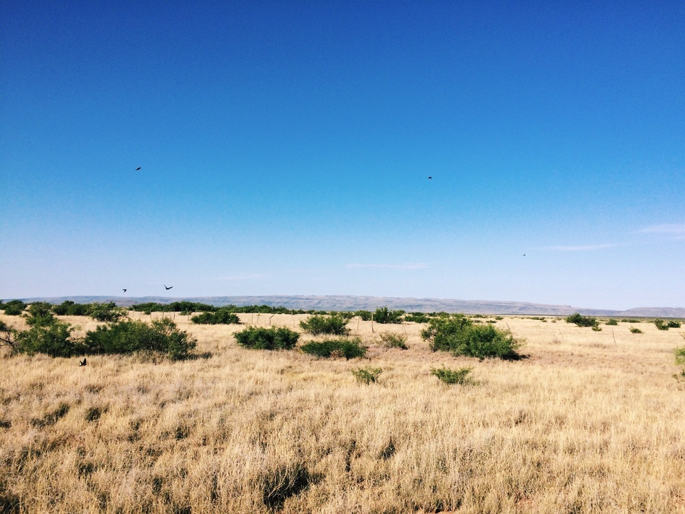 Marfa, Texas | July 18