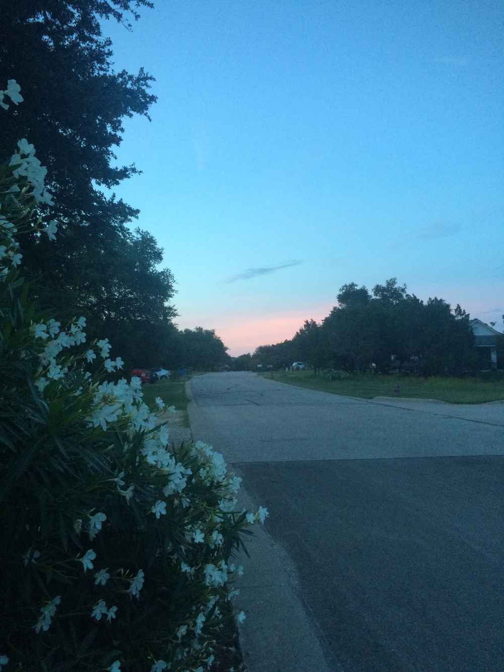 A dog walk complete with a dreamy sunset and the scent of white oleanders.