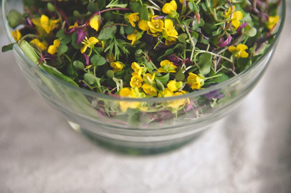 micro green and mustard flower salad: edible flower menu