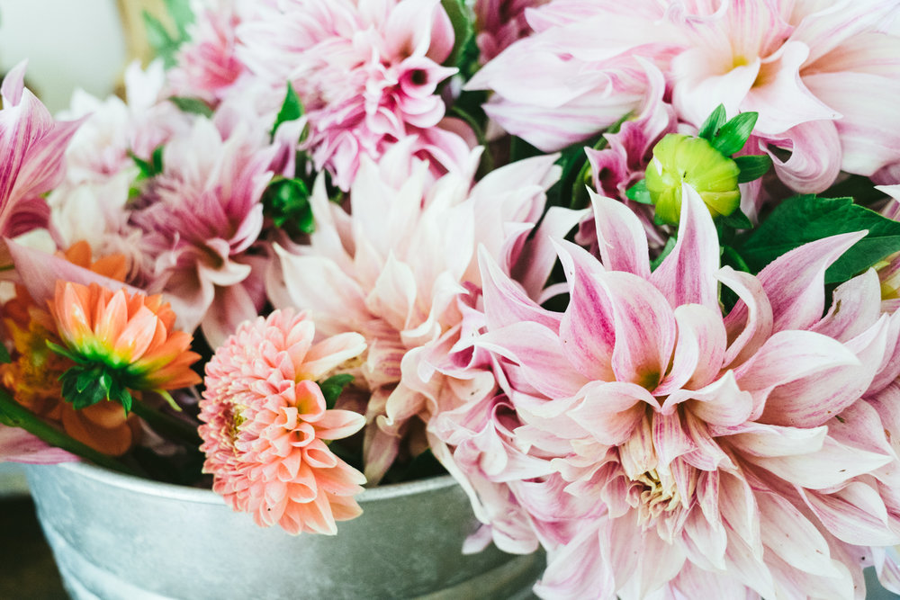 dahlias, virginia, loudoun county