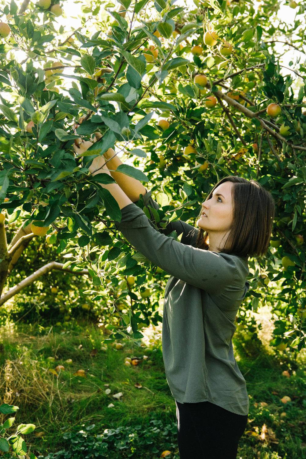 northern virginia apple picking