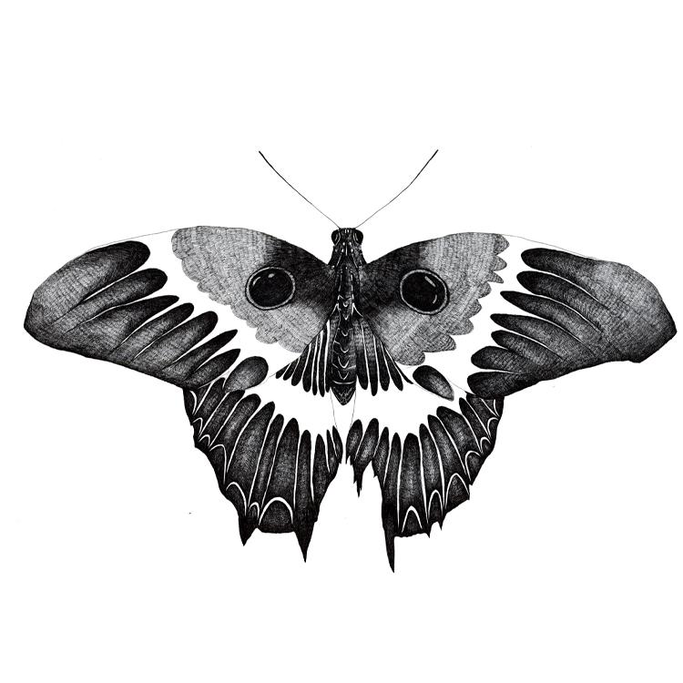 http://static.squarespace.com/static/5151f2c5e4b0030300323d69/51532081e4b02d3f1d58d74c/5157f94de4b0ec1768d84822/1364719949793/Butterfly.jpg?format=750w