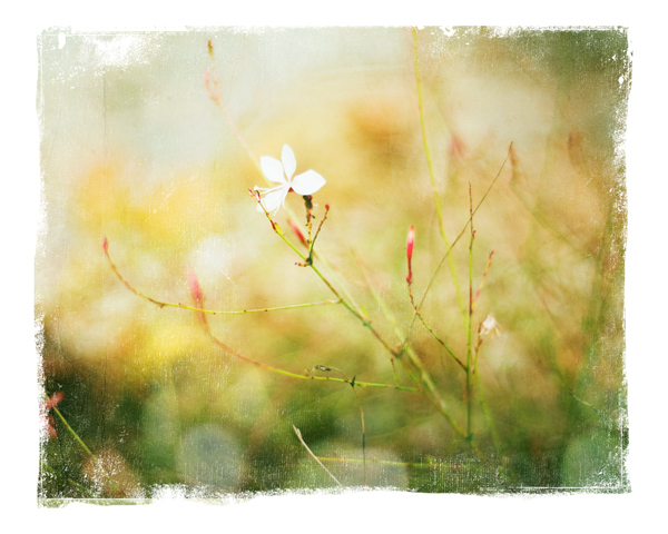 Scuffy edge mask, photo texture, and bokeh overlay from Photo Enhancement 1 by Jessica Sprague