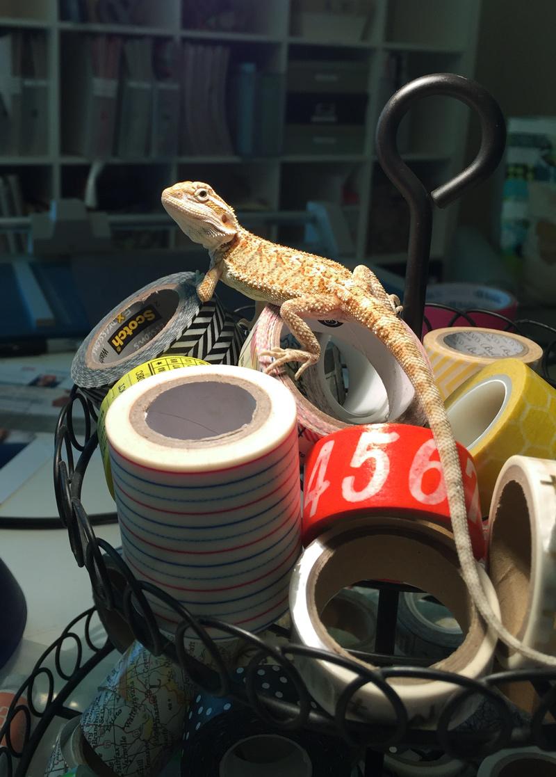 Yep, he's sitting on my washi tape. A favorite spot.