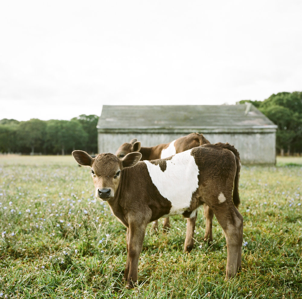 20120715ma_grey_barn_film_C-8.jpg