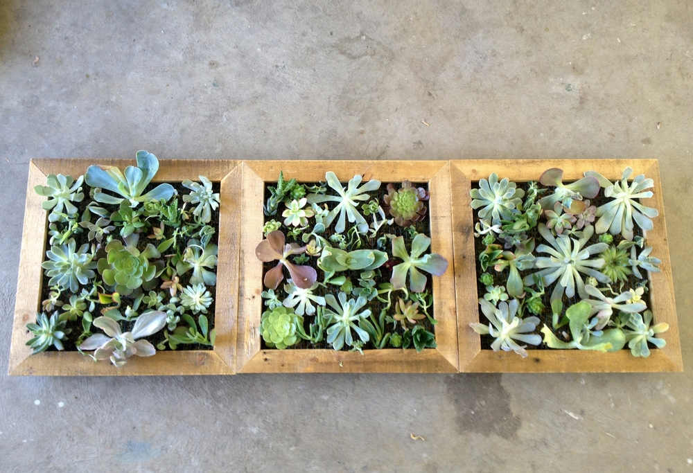 Succulent Wall Art 4.JPG