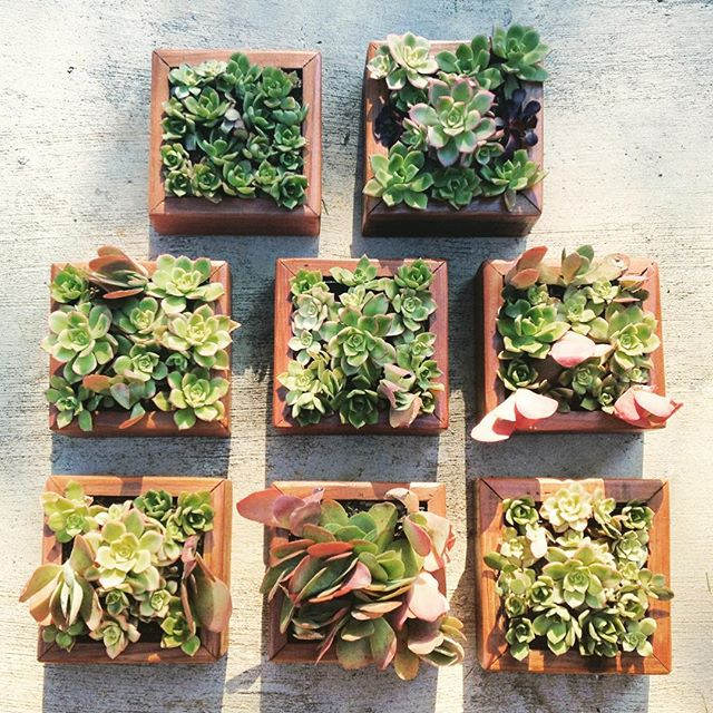 Vertical succulent planters - hang them up or use them as centerpieces 👍🏻 #localtimber #furniture #reclaimed #wood #rustic #custom #reclaimedwood #upcycle #design #interior #interiordesign #handmade #madeinusa #homedecor #home #buyfolk #vsco #style #livefolk #liveauthentic #art #local #losangeles #succulents #livingart #dstexture #vintage #california #shopsmall #etsy