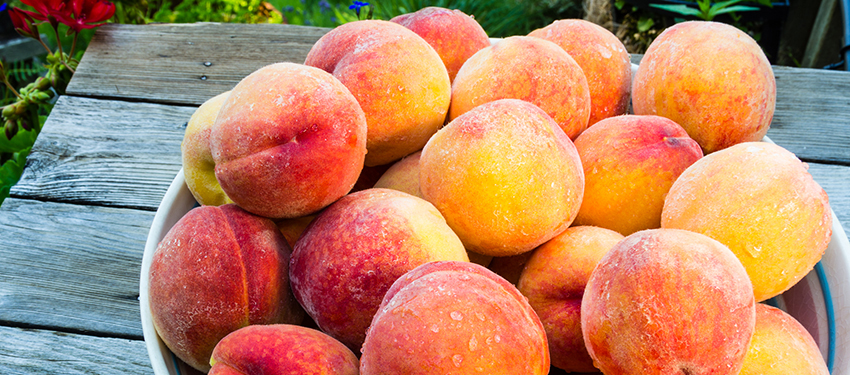 peaches-header-photo.jpg